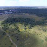 Лесной массив в Павлинино